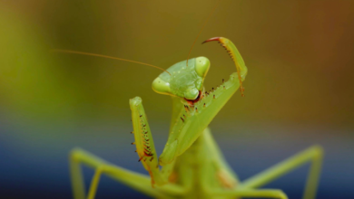 Photo of 'Mantis Munch' wins Atomos prize in Covid-19 video competition